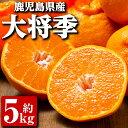 【ふるさと納税】大将季 5kg_ja-645