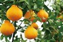 【ふるさと納税】mandarin-66ながしまマンダリン王(不知火みかん)5Kg