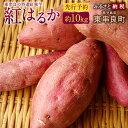 【ふるさと納税】東串良の特選紅蜜芋紅はるか (先行予約)約10kg さつまいも サツマイモ 焼芋 ヤキイモ 国産 九州産 芋 いも 送料無料
