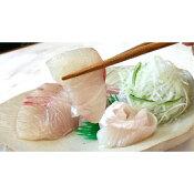 【ふるさと納税】No.3005 ふる里館 カンパチ・ヒラマサ食べ比べセット