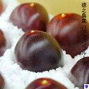 【ふるさと納税】徳之島パッションフルーツ(予約)
