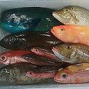 【ふるさと納税】おまかせ鮮魚セット(約7kg)