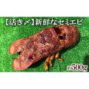 【ふるさと納税】【活き〆】新鮮なセミエビ(約500g)