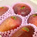 【ふるさと納税】先行予約!ご家庭用南城市産アップルマンゴー2...