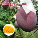 【ふるさと納税】南国沖縄県南城市産特別栽培マンゴー1kg(2...