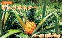 【ふるさと納税】【数量限定】大宜味村産ジュリオスター【201...