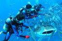 【ふるさと納税】【3名様】圧巻!ジンベエザメ体験ダイビング