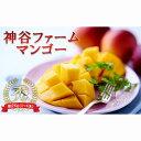 【ふるさと納税】【2020年発送】神谷ファームのマンゴー(秀)約2kg