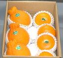 ジューシーで美味しい話題の高級柑橘詰め合わせお試し超特価セール!本場熊本産デコポン・高級柑橘せとか 約2kg詰め合わせ 【スポーツ0903】