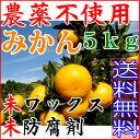 【訳あり】無農薬 愛媛みかん 約5kg みかん サイズ混