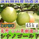 【訳あり】減農薬 長野 シナノゴールド りんご 約4.5kg...