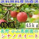 シナノスイート 送料無料 産地直送 長野産 減農薬 有機肥料使用 A品 約4.5kg 8〜25個入 完熟 リンゴ りんご 林檎 長野県産 小山 長野