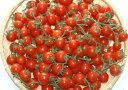 全額返金保証 甘い 808 ミニトマト 1.5kg 房付き プチトマト フルーツトマト 和歌山産 SSS 母の日 父の日 3t