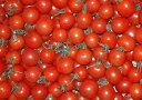 高糖度10度 和歌山産 808 ミニトマト 1kg 房なし フルーツトマト