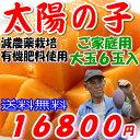 【訳あり】減農薬 宮崎マンゴー 太陽の子 B品 大玉6玉 約2.2kg〜2.4kg入