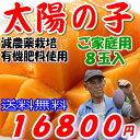【訳あり】減農薬 宮崎マンゴー 太陽の子 B品 8玉 約2.6kg〜2.8kg入