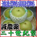 【訳あり】減農薬 長野産 二十世紀梨 約4.5キロ 12〜1...