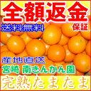 【10%OFFクーポン対象】宮崎産 減農薬 完熟 きんかん ...