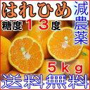 【訳あり】減農薬 はれひめ 約5kg ご家庭用 サイズ混