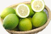訳あり減農薬 愛媛産 レモン 5kg 加工用 国産 産地直送 ore