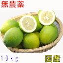 【訳あり】愛媛産 無農薬 レモン 10kg 国産 産地直送 ore