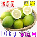 【訳あり】減農薬 愛媛産 レモン 10kg 家庭用 国産 産地直送 ore