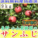 送料無料 糖度15度以上 長野 減農薬 有機肥料使用 サンふじ 約9kg 24〜50個入 ご家庭用 完熟 林檎 リンゴ りんご 訳あり 売れ筋 セール 産地直送 さんふじ 小山 ポイント10倍