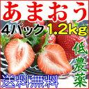 送料無料 産地直送 低農薬 福岡産 あまおう ご家庭用 4パック 1200g 大粒40〜64粒入 いちご 苺 イチゴ 訳あり あまおう苺