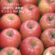 【訳あり】 減農薬 長野 サンふじ りんご 約4.5kg 12〜25個入 リンゴ 林檎 産地直送 小山 【SSS】 12n