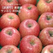 【訳あり】 減農薬 長野 サンふじ りんご 約9kg 24〜50個入 リンゴ 林檎 産地直送 小山 【SSS】 12n