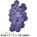 【2021年9月出荷】 岡山産 ぶどう ピオーネ 1.8kg 3~5房 化粧箱入 ブドウ 葡萄 産地直送 SSS 9t