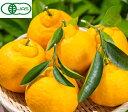 送料無料 有機JAS 無農薬 和歌山産 三宝柑 約5kg サイズ混合 ご家庭用 バラ詰め 産地直送 有機栽培 訳あり オーガニック みかん 柑橘