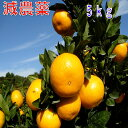 和歌山産 減農薬 みかん 約5kg 2S〜Lサイズ混合 ミカン 蜜柑 産地直送 NN
