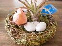 着生植物 エアープランツ チランジア 鳥の巣セット 福鳥付き癒しの観葉植物 観葉植物 インテリア おしゃれ かっこいい インテリアグリーン