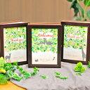三連ウッディアルバム(3冊セット)「ツリー」ウェディングツリー/結婚式/つながるデザイン/ご両家と新郎新婦お揃いのプレゼント