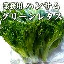 業務用ハンサムグリーンレタス1.2kg 伊勢志摩産・水耕栽培