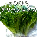 ハンサムグリーンレタス(おかげ野菜)120g ファーム海女乃島・水耕栽培