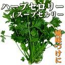 ハーブセロリ/スープセルリー 50g ファーム海女乃島・水耕栽培