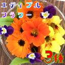 エディブルフラワー3種(食用花)伊勢志摩産 水耕栽培