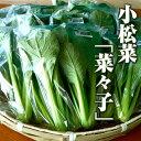 小松菜『奈々子』/Japanese mustard spinach Nanako 120g ファーム海女乃島・水耕栽培