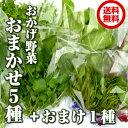【送料無料】伊勢志摩の自然で育った珍しい水耕栽培野菜:おかげ野菜おまかせ5種+おまけ野菜1種! ファーム海女乃島