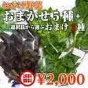 【送料無料】伊勢志摩の自然で育った珍しい水耕栽培野菜:おかげ野菜おまかせ5種+おまけ野菜2種!
