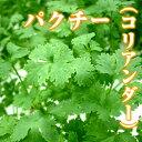 生パクチー(コリアンダー)50g ファーム海女乃島・水耕栽培