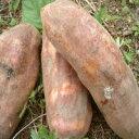 【送料無料】奇跡の野菜 ポリフェノールたっぷり・フラクトオリゴ糖の塊!ヤーコン5kg【生芋】