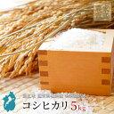 お米 コシヒカリ 5kg 令和2年産 近江米 滋賀県産 美味しい 環境こだわり米 玄米 白米