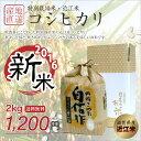 【新米】【送料無料】平成28年 滋賀県産 コシヒカリ 特別栽培米 2kg 近江米 白米 玄米【返品保証】