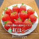 【送料無料】紅ほっぺ(いちご)2パック(12~30粒)長野県・中野市産