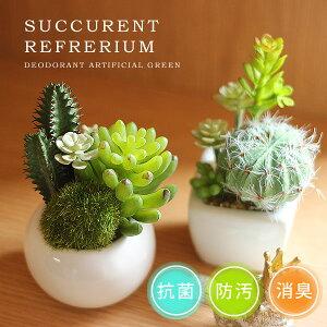 サキュレントリフレリウム アーティフィシャルグリーン デオドラント 多肉植物