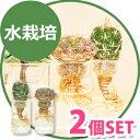 【2個SET】水だけでサボテンを育てる!cacti aqua カクティアクア