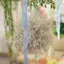 東谷 植物 飾り LFS-902C ボールフェイクグリーンS【AZM】【QCA41】